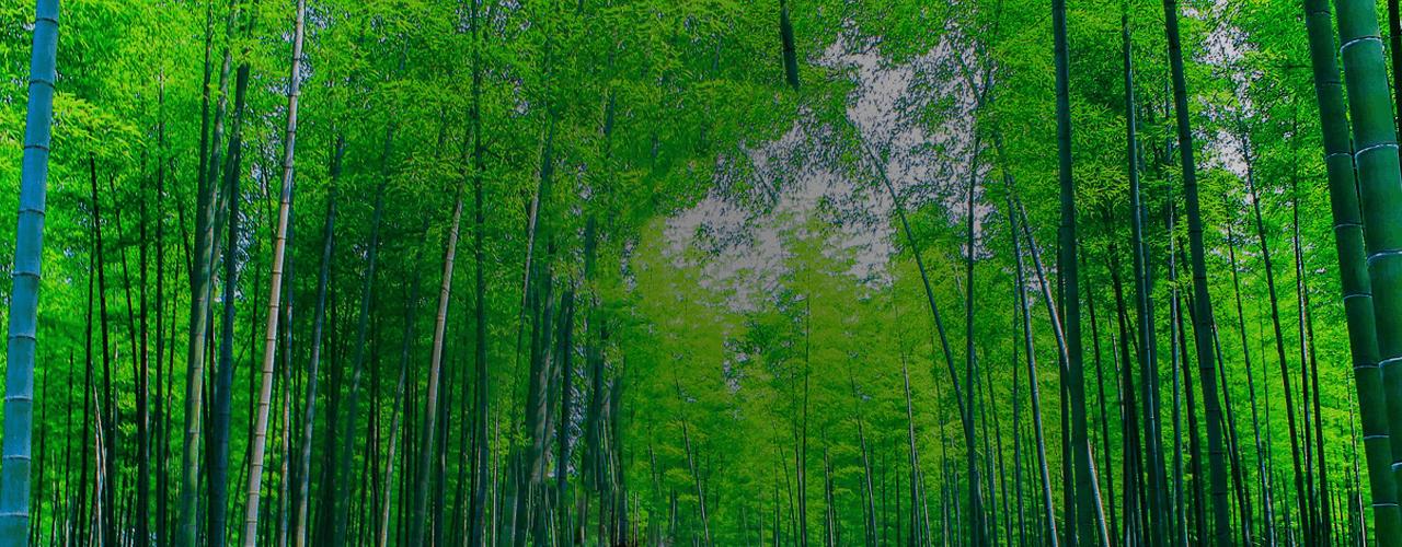 Raumteiler Bamboo Hintergrund Slider