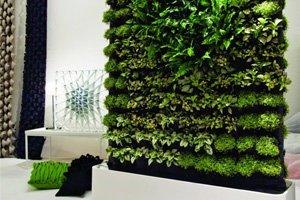Eine Pflanze als Raumteiler